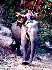 Elephant trekking, north of Chiang-Mai